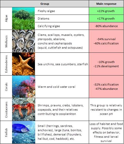 Summary of effects of ocean acidification among key taxonomic groups.