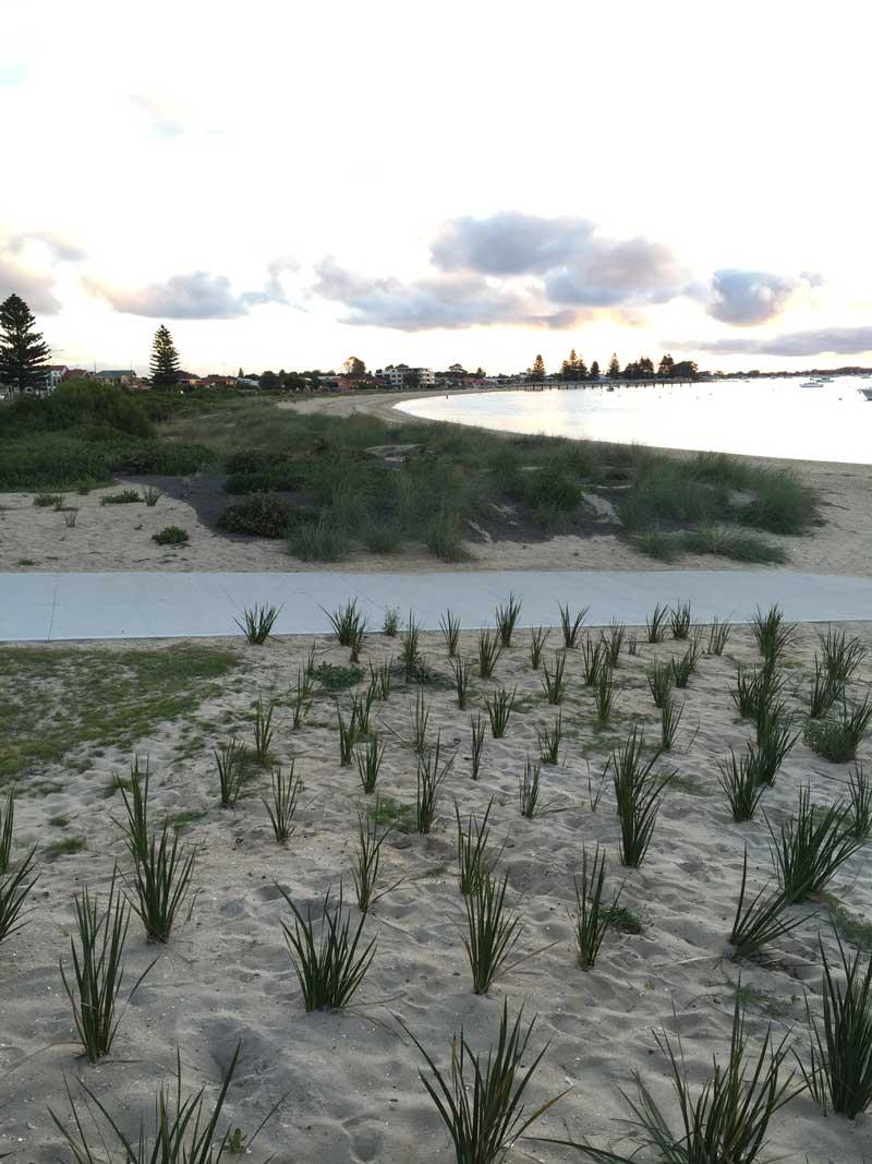 Dune planting and associated stabilisation in Rockingham, West Australia
