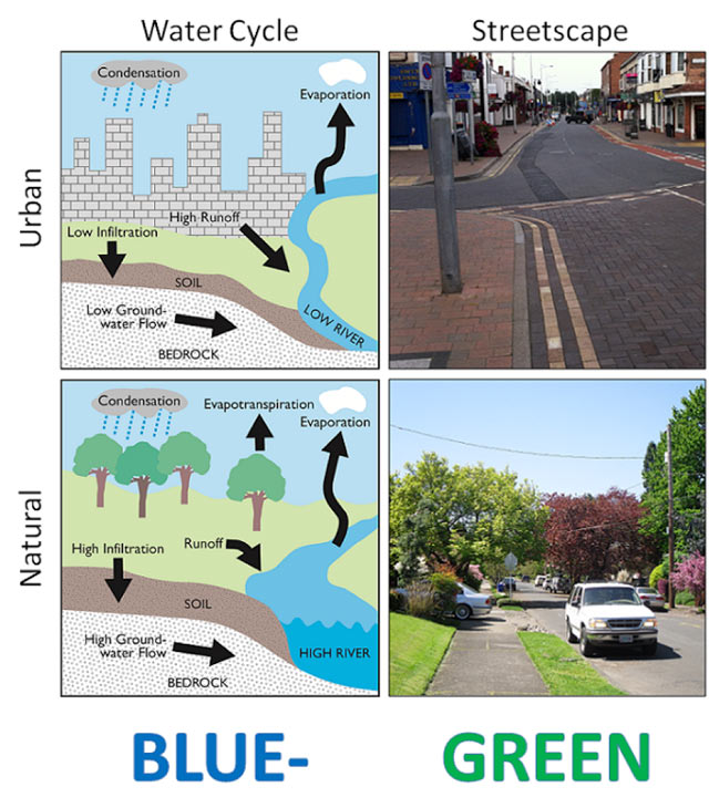 Comparison of the water cycle and streetscape attributes in conventional (upper) and blue-green (lower) cities